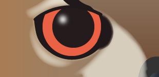 A fresh pair of eyes